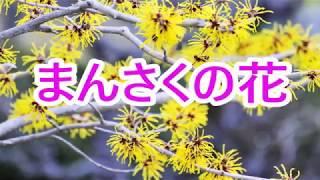まんさくの花 山内惠介 COVER 3月6日発売