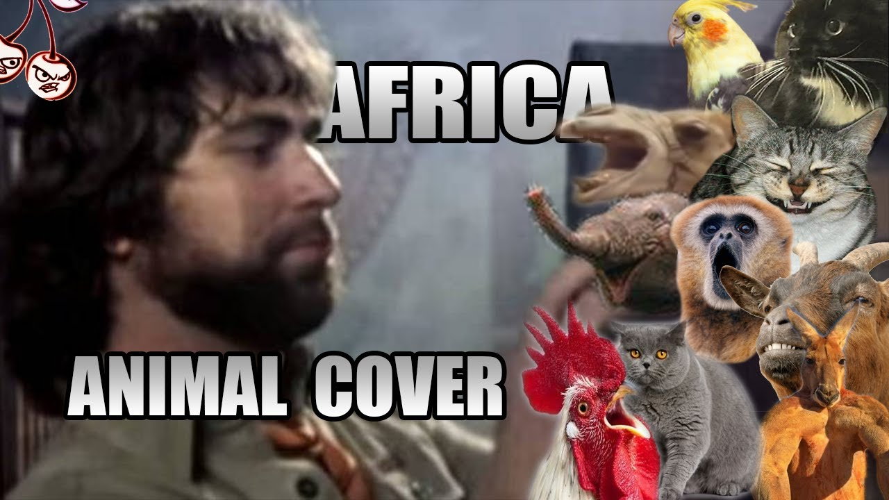 Toto - Africa (Animal Cover)