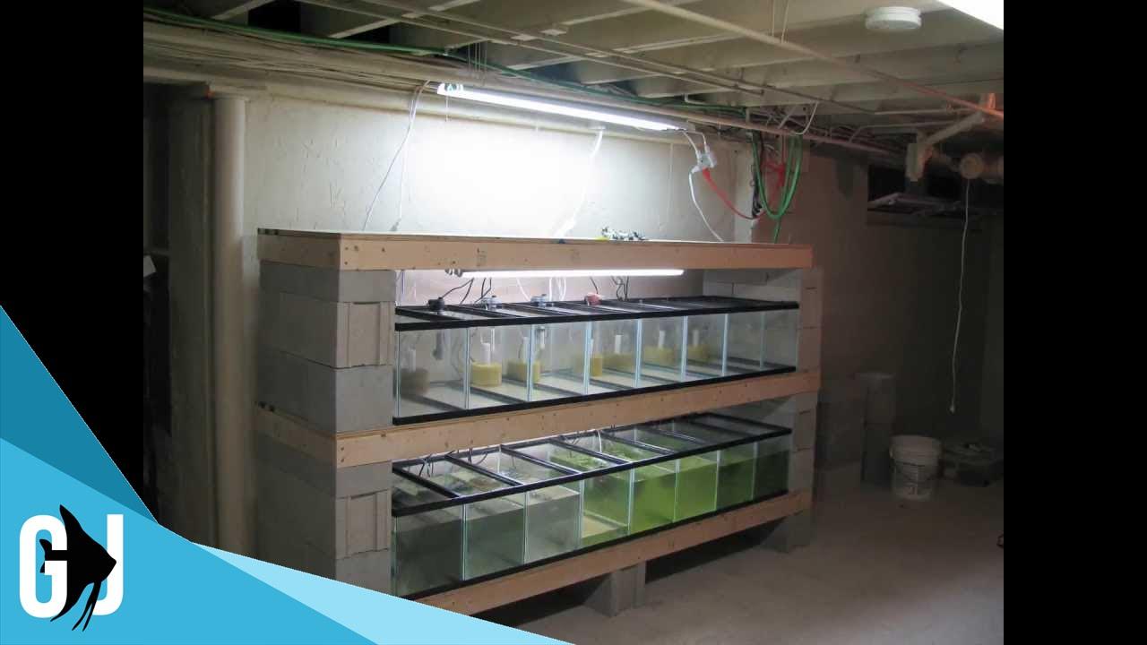 how to time lapse aquarium tank rack construction