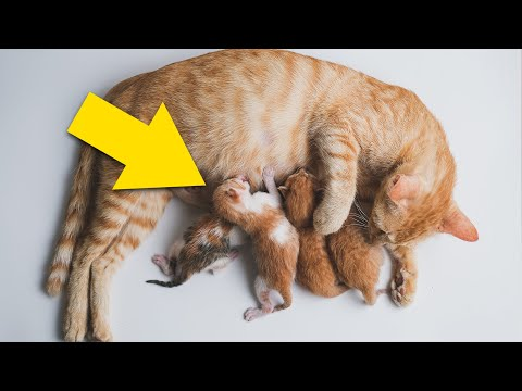 Cat Gives Birth, Then Doctors Realize Theyre Not Kittens