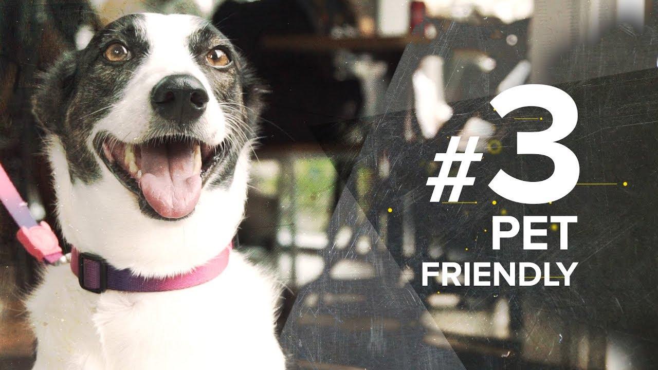 OPEN EP.3 - PET FRIENDLY