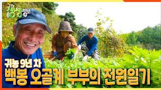 [2TV 생생정보] 귀농 9년 차 백봉 오골계 부부의 전원일기 | KBS 211014 방송