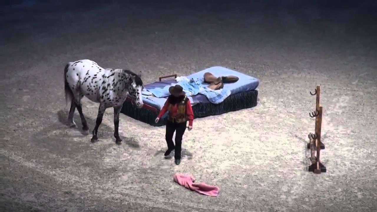 Scout pferd