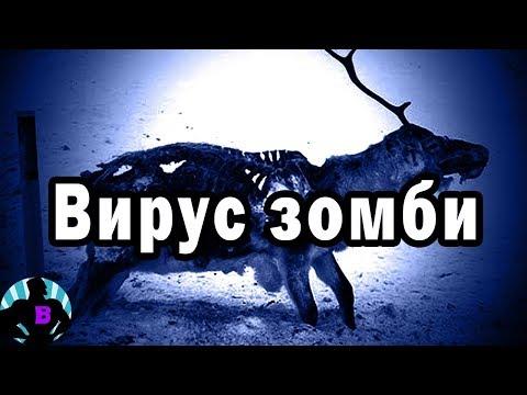 Зомби-олень: 3 самых пугающих случая с участием животных