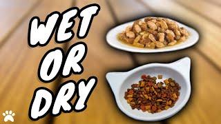 Feeding A British Shorthair Cat Wet Or Dry Food