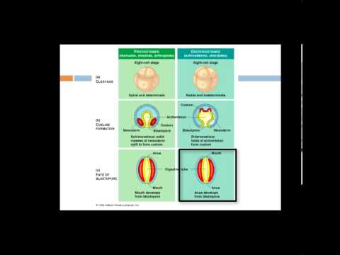 AP Biology cvitale Intro to Animals.mp4