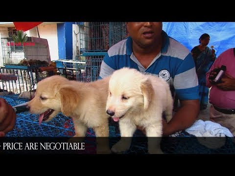 DOG PUPPY AT GALIFF STREET MARKET KOLKATA INDIA | 1ST JULY 2018 WITH SELLER NUMBER PART 2