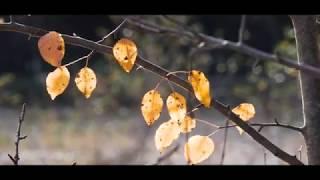 Осень в Баговской 4K Ultra HD
