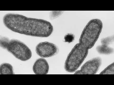 E.coli outbreak jumps to 34 cases