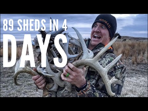 EPIC SHED HUNTING! 89 Sheds In 4 Days! 2018 | Bowmar Bowhunting |