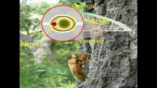 03 Insect Wings: Formation and Structure