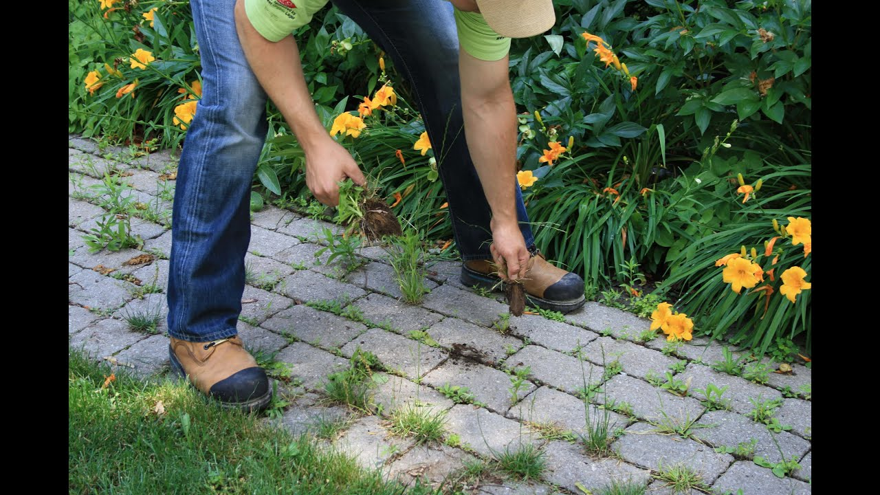 How to Remove Weeds from Your Paving Stones and Install ...