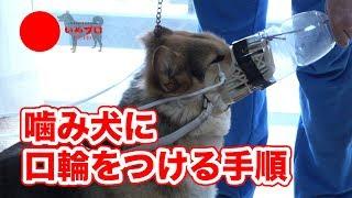 犬の正しい情報発信と共有をし、犬と人の未来をより良くするプロジェク...