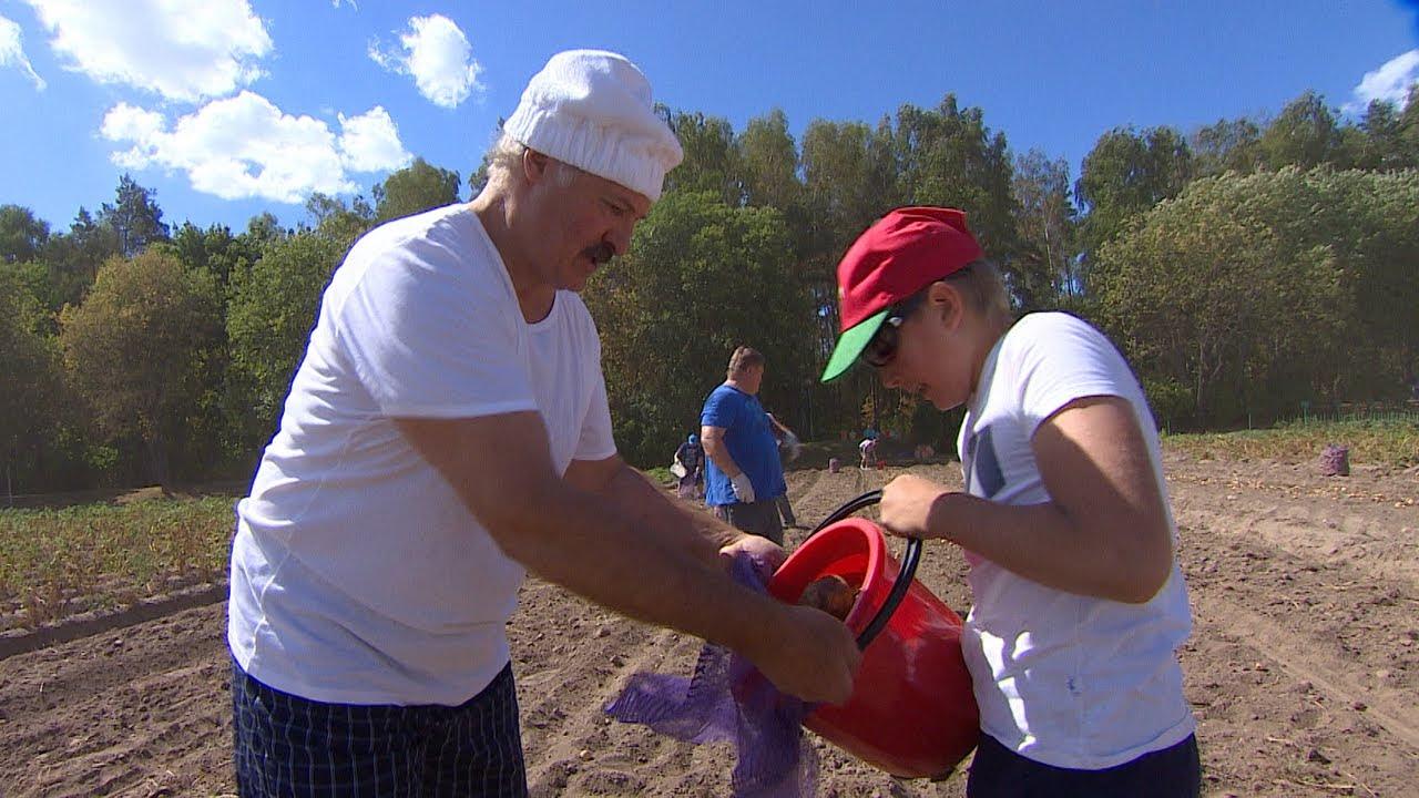 Лукашенко с младшим сыном убрал урожай картофеля и бахчевых в резиденции Дрозды