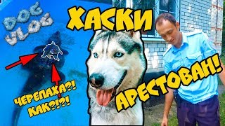 DOGVLOG: ХАСКИ АРЕСТОВАН за НЕЗАКОННОЕ проникновение В ЗООПАРК. Говорящая собака