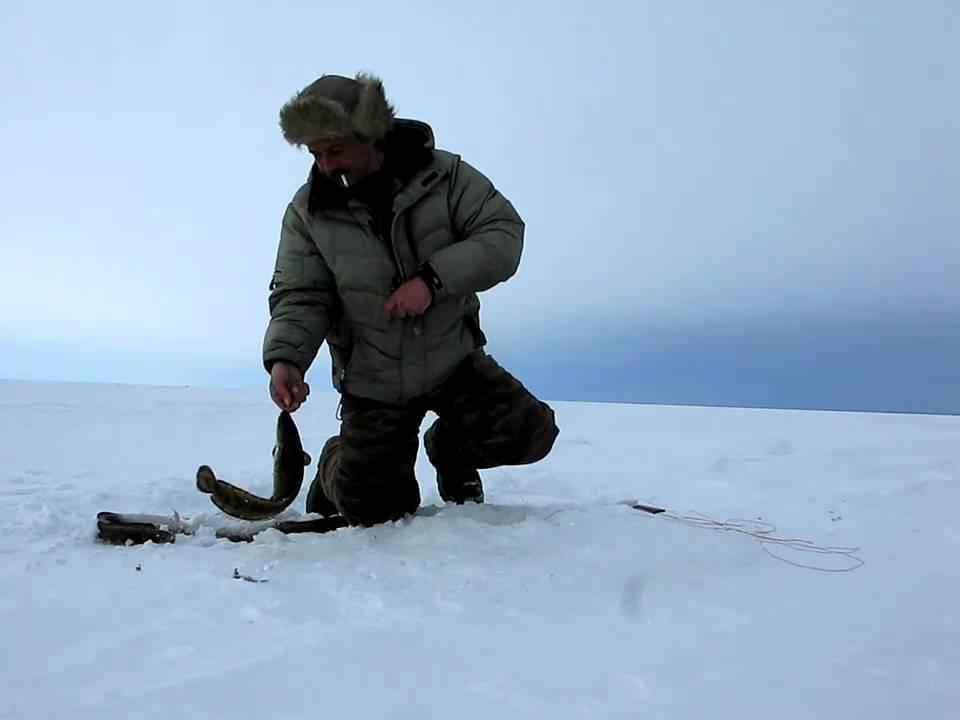 Ловля налима на рыбинском водохранилище зимой