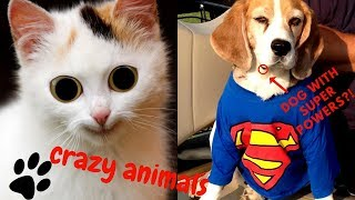 funny cats and dogs!!! stupid and funny animals cimpilation!!!
