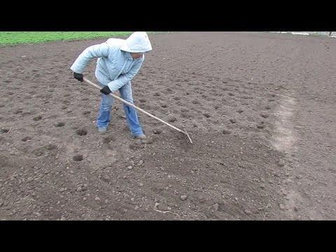 видео: Посадка картоплі вручну.