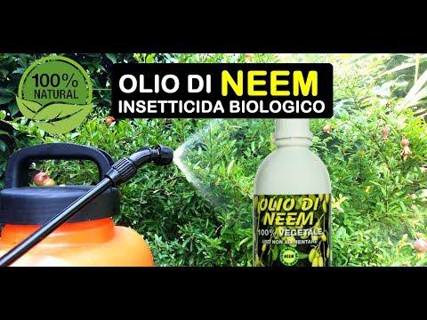 OLIO DI NEEM INSETTICIDA BIOLOGICO