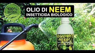 Download lagu OLIO DI NEEM INSETTICIDA BIOLOGICO