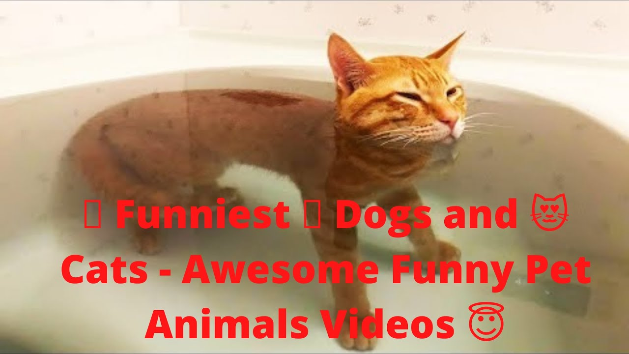 Download 🤣 Funniest 🐶 Dogs and 😻 Cats   Awesome Funny Pet Animals Videos 😇