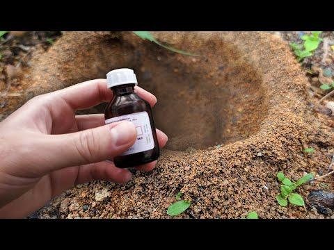 Выгнал муравьев и тлю без химии этим копеечным средством!