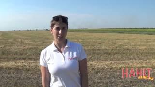 Результаты по урожайности ярого ячменя НАНІТ | НАНИТ
