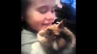 Кошка соскучилась по хозяйке.