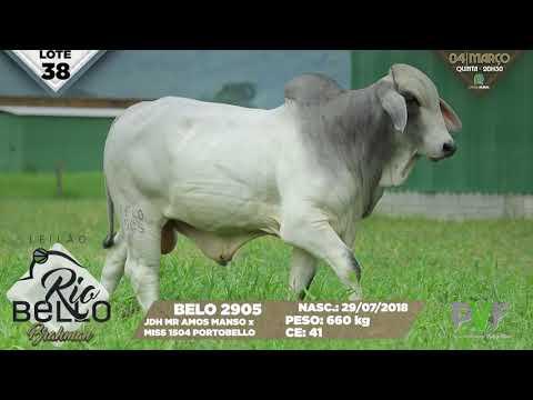 LOTE 38   BELO 2905
