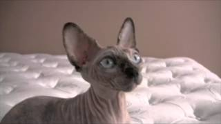 Nika 003 Nude Alien Cat