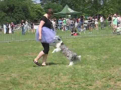 Speed, Pierwszy pokaz dog dancing, Heelwork to Music