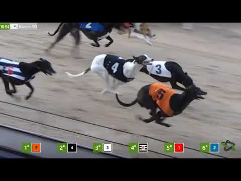 Dogs Racing - Virtual Generation Games Betting & Gaming Provider Solution