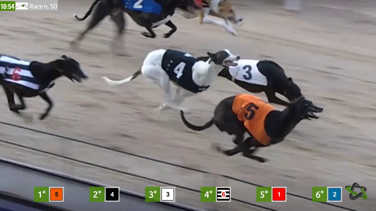 Dog racing betting games afl coleman medal 2021 betting odds