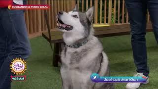 Consejos para adiestrar a tu perro | Sale el Sol