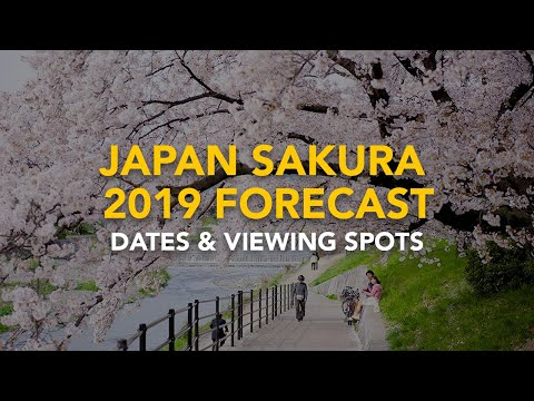Cherry Blossoms in Japan 2019: Dates & Viewing Spots
