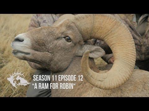 Rocky Mountain Bighorn Hunt