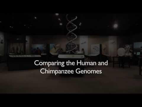 Richard Dawkins: Comparing the Human and Chimpanzee Genomes - Nebraska Vignettes #3