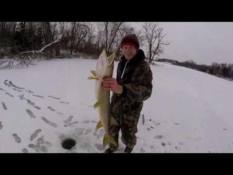 PERCH N PIKE!! (Ice Fishing Beebe Lake Mn)