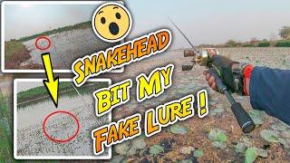 ត្រីស្រុកនេះញាំនុយជ័រ   Snakehead Bit My Fake Lures!   Fly Fishing Vlog #06