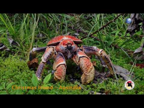 Extra Divers: Christmas Island / Australia