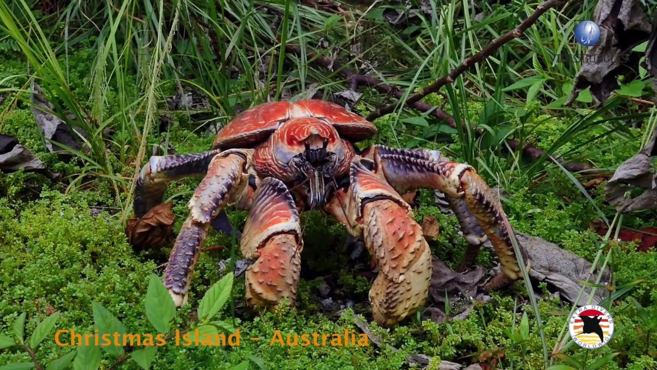 extra divers christmas island australia