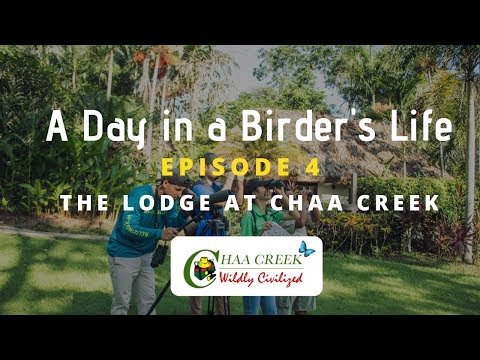 Birding in Belize: The Lodge at Chaa Creek