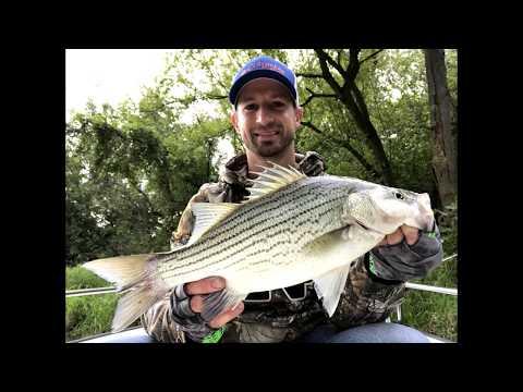 Catching Wiper Hybrids At Buckeye Lake