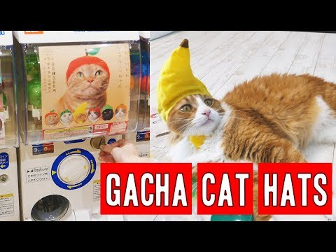 The Japanese Way To Annoy Cats Cat Gachapon