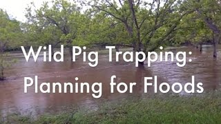 Wild Pig Trapping: Planning for Floods
