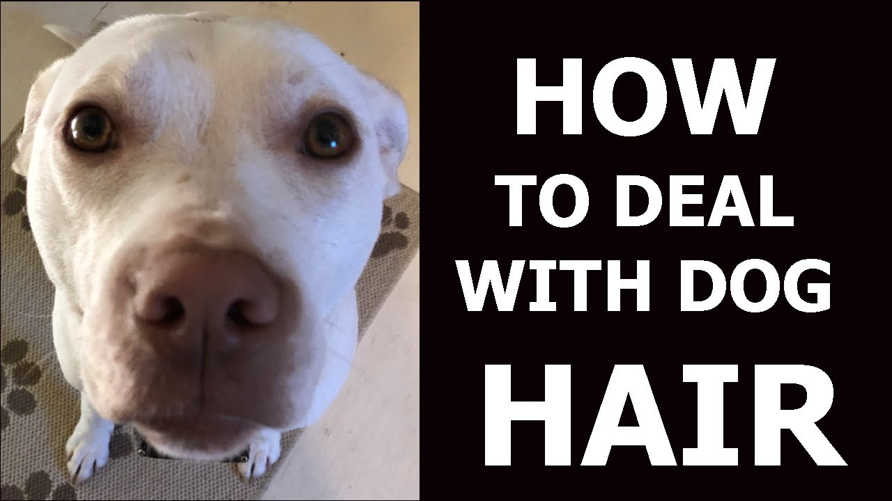 Dog Hair Problems | How To Deal With It