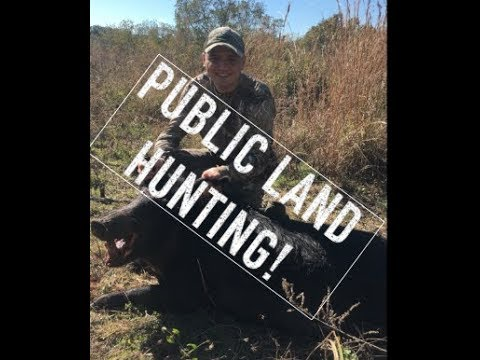 How To Go Hunting In Florida: Online Tutorial On How To Hunt Public Land