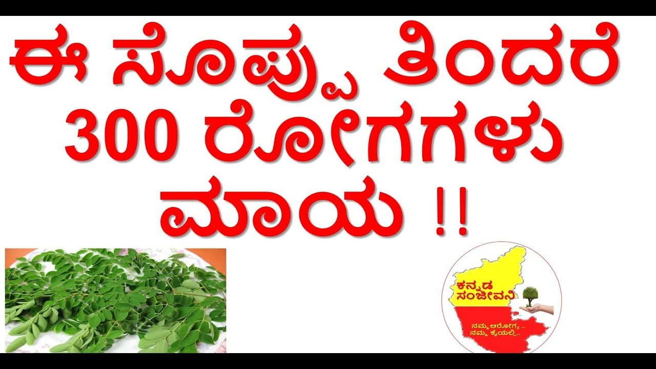 Health Benefits of Moringa leaves ( Drumstick leaves)| Drumstick leaves|Uses| Kannada Sanjeevani ...