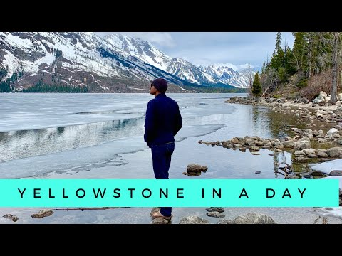 VAN LIFE | Yellowstone & Grand Tetons | WE SAW A BEAR!