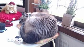 ジャンくん #ポンちゃん #ネット #猫カフェ 忘年生放送は https://www.y...
